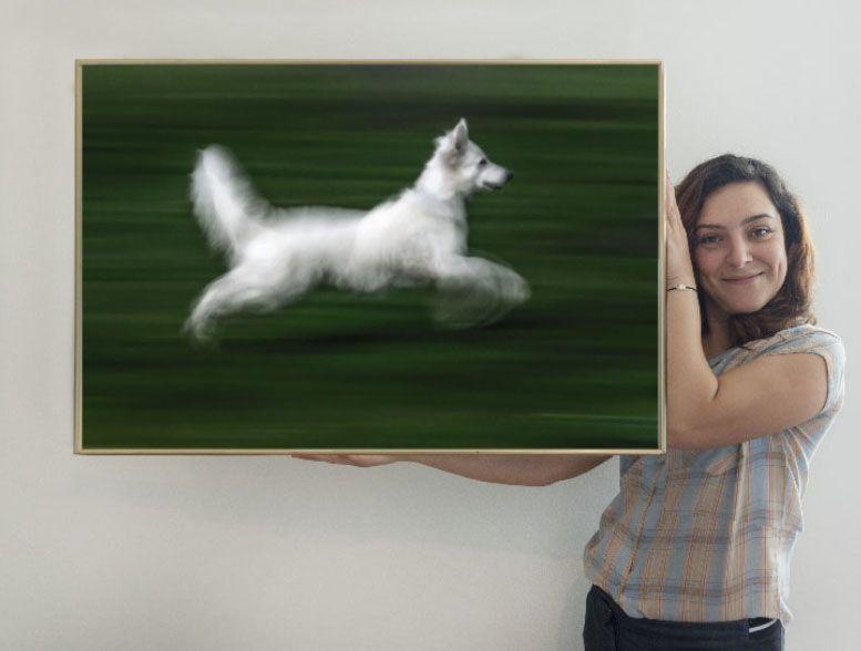 el perro blanco 90 xisco fuster fotógrafo