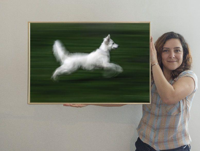 el perro blanco 80 xisco fuster fotógrafo