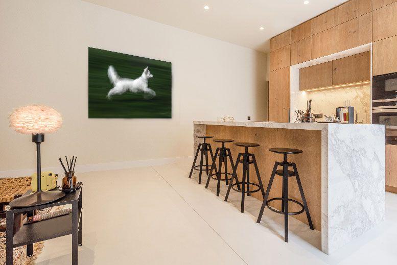 el perro blanco de xisco fuster fotografo