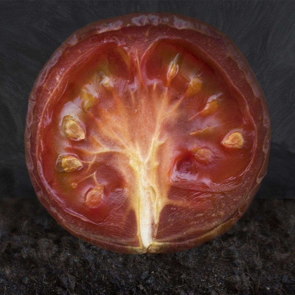 fotografia de producto tomate arte arbol